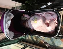 婴儿车品牌排行榜2021